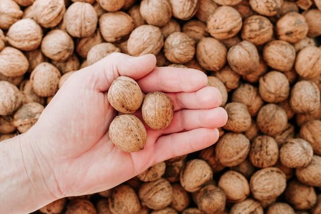 Noix dans la main de l'homme, mains du hunan tenant trois noix