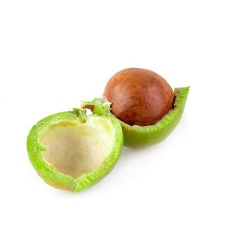 Noix de macadamia fraîches isolés sur fond blanc