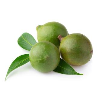Noix de macadamia isolé sur fond blanc