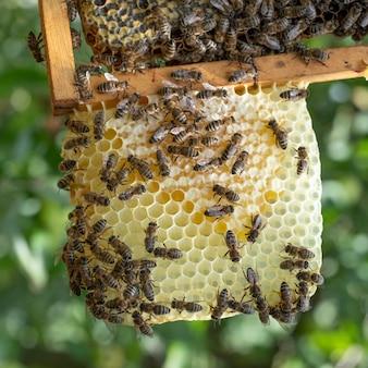 De Nombreuses Abeilles Travaillent Sur Les Nids D'abeilles, Dans Le Rucher Photo Premium
