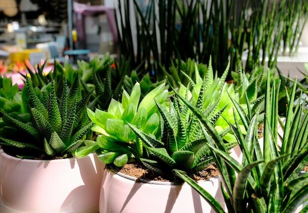 De nombreux cactus différents dans des pots de fleurs se mélangent à la vente en magasin de fleurs. centre de jardinage avec beaucoup de petits cactus en pot en vente sur le marché aux fleurs. divers succulentes en pots au détail