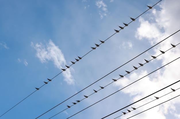 De nombreux oiseaux d'hirondelle rapide ou de merlet perché sur des fils au-dessus du ciel bleu
