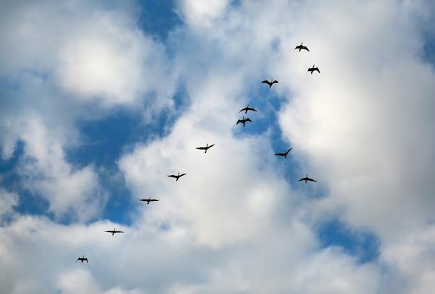 De nombreux oiseaux s'envolent dans le ciel nuageux