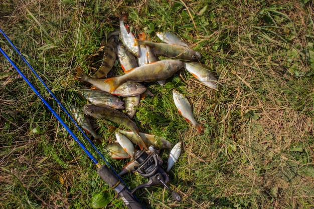 De nombreux perchoirs de rivière sur l'herbe verte avec filature