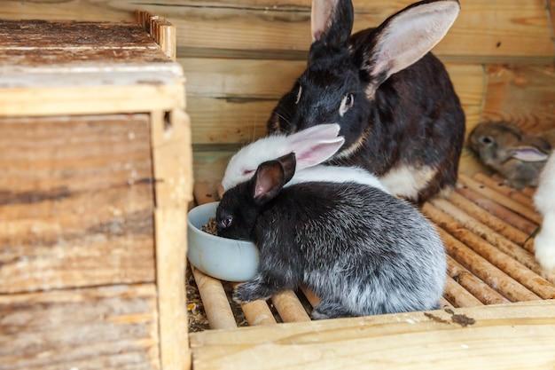 De nombreux petits lapins différents sur la ferme des animaux en clapier