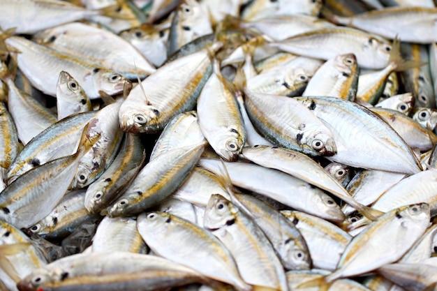 De nombreux poissons jaunes de carangue.