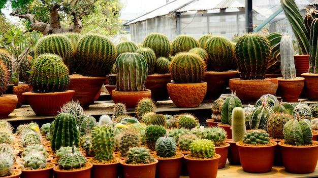 De nombreux types de plantes de cactus à l'intérieur de la pépinière