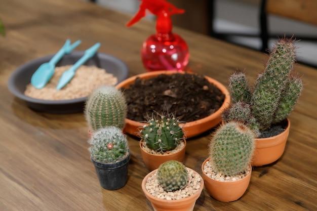 De nombreux types et tailles de cactus, de terre et d'outils de jardinage pour la décoration du jardin.