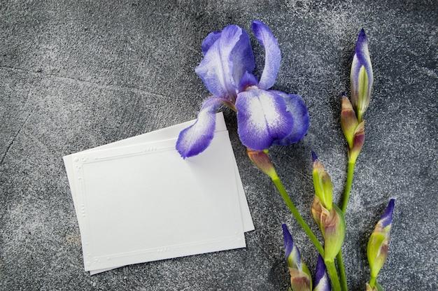 Note vide et iris violet sur gris