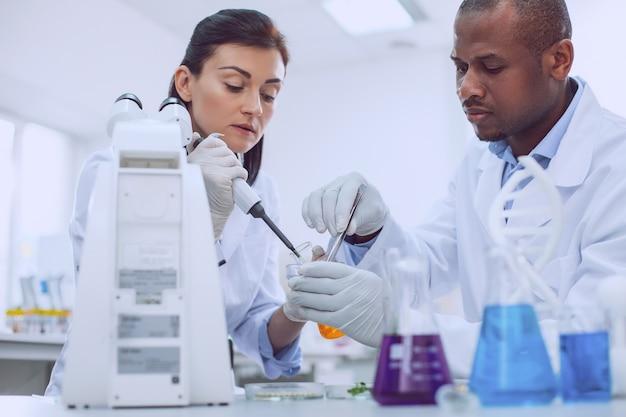 Notre recherche importante. chercheur habile et intelligent effectuant un test et son collègue l'aidant