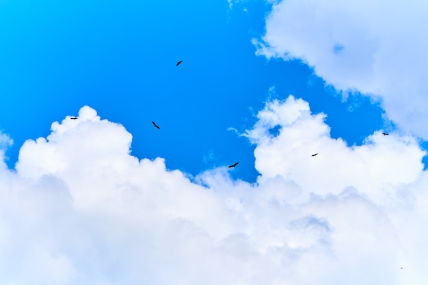 Nourrir les aigles. troupeau d'aigles tournant dans le ciel en attente de nourriture.