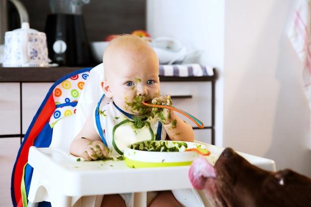 Nourrir bébé enfant mangeant avec une cuillère dans une chaise haute babys first solid food dog lécher le pied