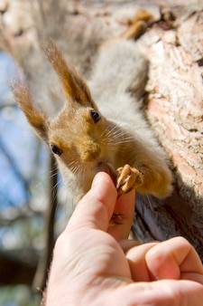Nourrir l'écureuil