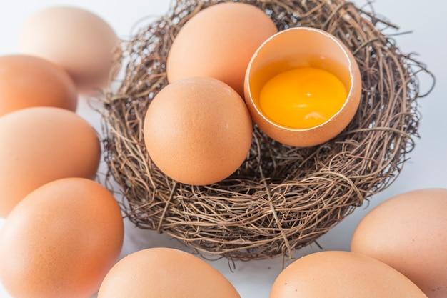 Nourriture naturelle personne protéine jaune d'animal