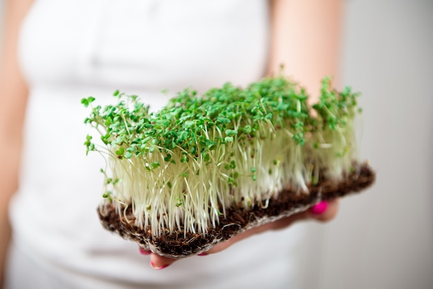Nourriture saine micro-verte et herbe verte. microgreens en germination.