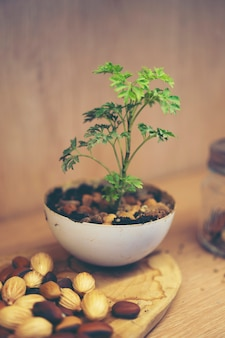 Nouveau concept de vie, semis dans la nature