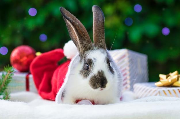 Nouvel an avec des animaux. lapin en chapeau de père noël avec des boîtes de cadeaux sur le sapin. concept de vacances, hiver et célébration. carte de noël avec lapin, bannière, espace copie, texte