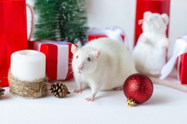 Nouvel an . rat domestique mignon dans un décor du nouvel an. le symbole de l'année 2020 est un rat.