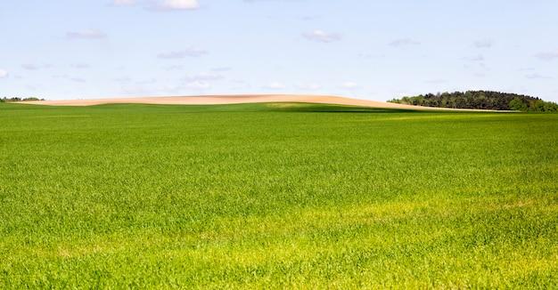 Une nouvelle récolte d'herbe utilisée en agriculture