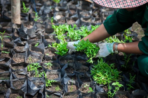 Nouvelle vie et conservation de l'environnement