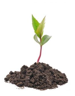 Nouvelle vie, croissance des plantes