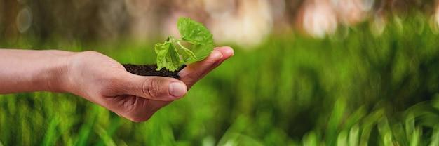 Nouvelle vie jeune plante à la lumière du soleil, croissance, semis.
