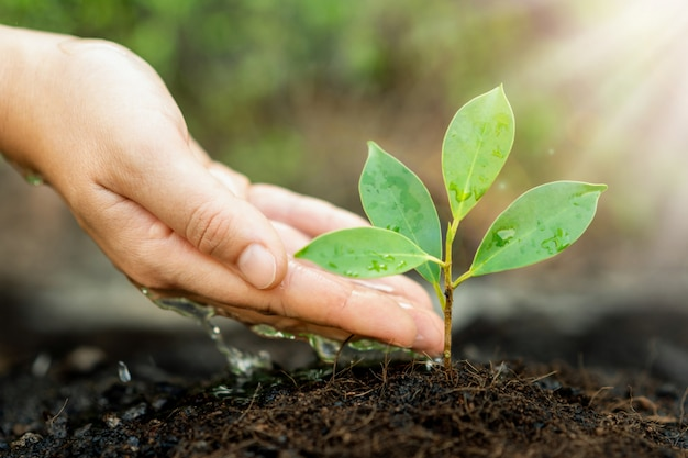 Une nouvelle vie de jeunes plants poussent dans un sol noir