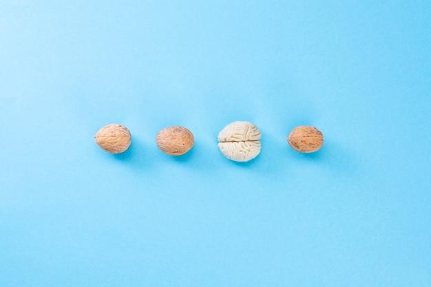 Noyer et cerveau. la forme du cerveau humain est similaire à celle des cerneaux de noix.