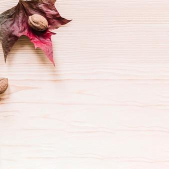 Noyer sur une feuille colorée