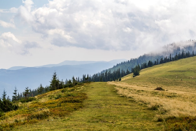 Nuages au-dessus d'une montagne avec forêt de pins verts et prairie d'herbe