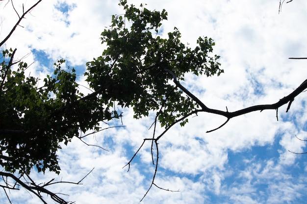 Nuages blancs moelleux un jour ensoleillé dans un ciel bleu un jour d'été