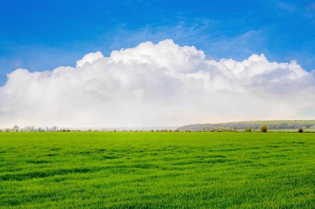 Nuages bouclés blancs sur un champ avec de l'herbe verte