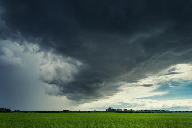 Nuages d'orage sur le champ de riz en saison des pluies