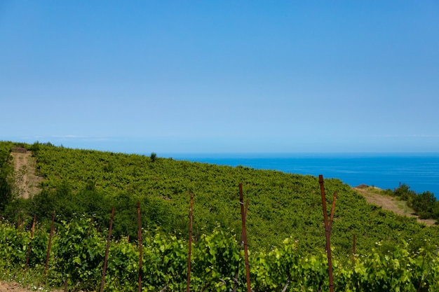 Nuages de pluie sur les montagnes et une vallée avec un vignoble verdoyant.
