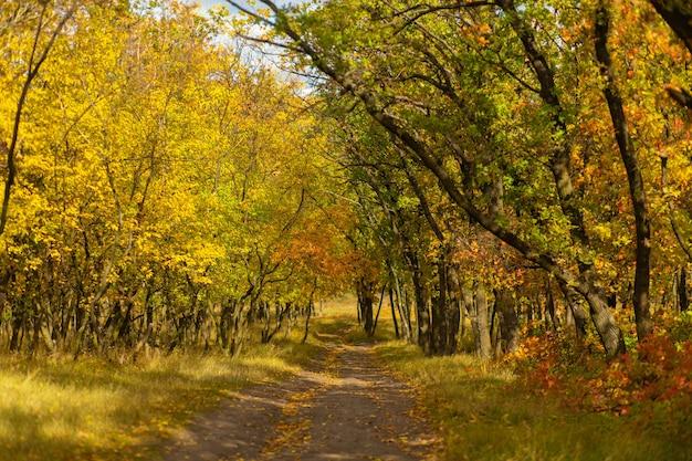 Nuances de couleurs d'automne. forêt aux couleurs vives de l'automne.