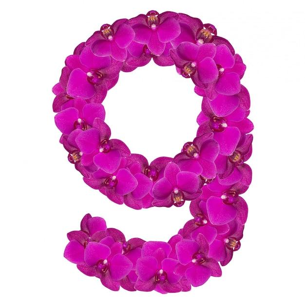 Numéro de l'alphabet neuf de fleurs d'orchidées isolé sur blanc