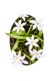 Numéro zéro: pochoir blanc avec petites fleurs