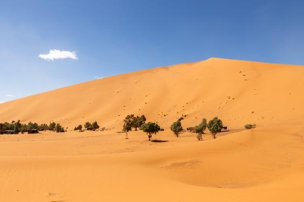 Oasis dans le désert du sahara, dunes d'erg shebbi