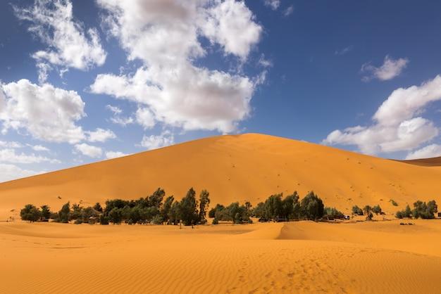 Oasis dans le désert du sahara