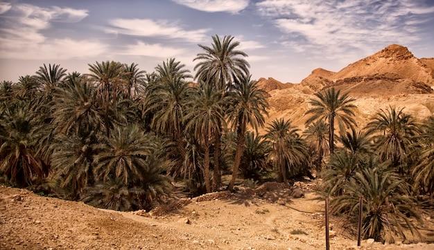 Oasis de paysage chebika dans le désert du sahara, règlement des ruines et palmier