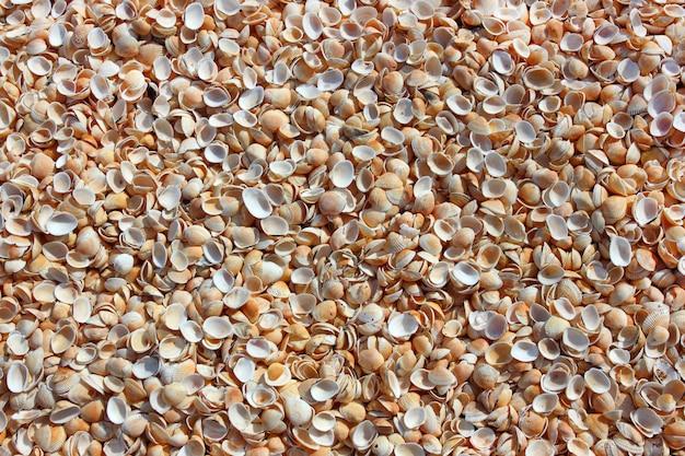 Obus sur la plage de la station balnéaire en vrac