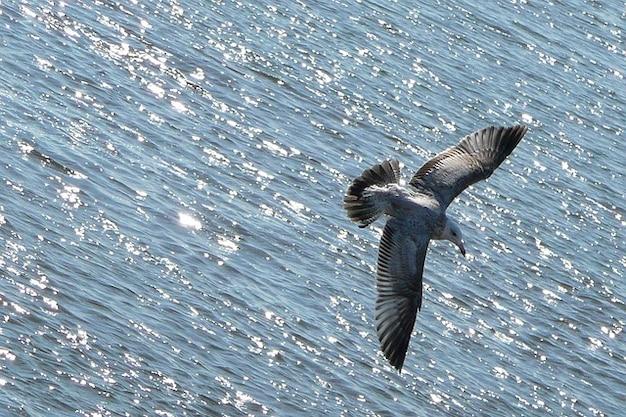 Océan animale mouette oiseau qui vole l'eau