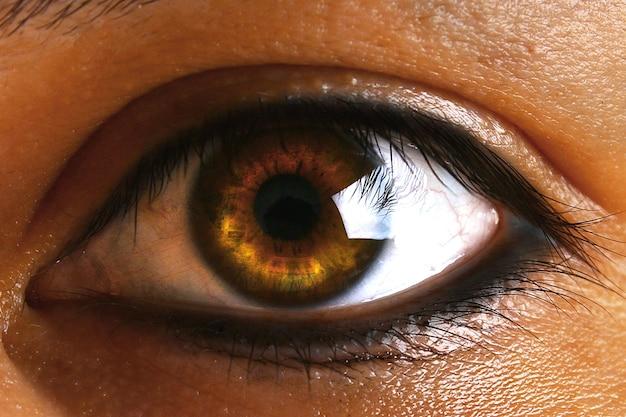 Œil brun humain vert brun avec des cils.