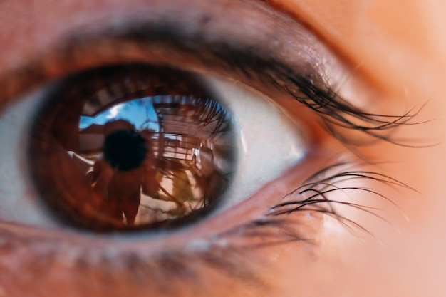 Oeil féminin de beauté avec de longs faux cils bouclés