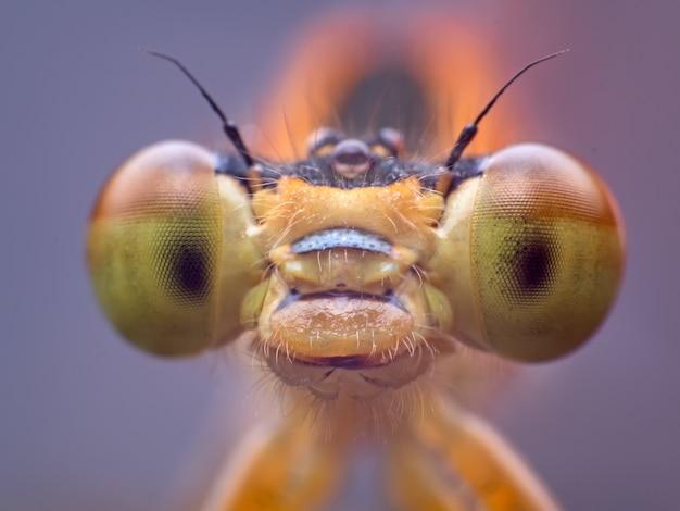 Oeil macro shot de libellule à l'état sauvage. mise au point sélective.