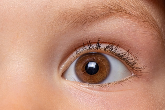Oeil sain brun du gros plan de l'enfant.