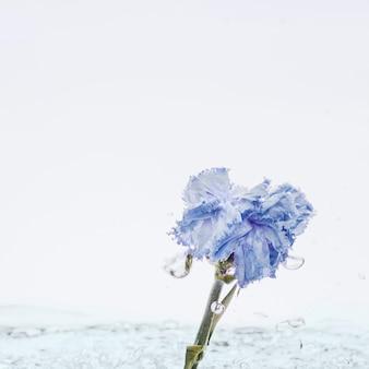 Oeillet bleu tombant dans l'eau