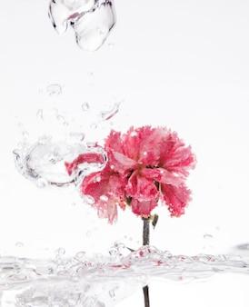 Oeillet rose tombant dans l'eau