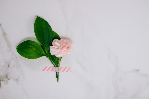 Oeillet rose vue de dessus et sur fond de marbre.