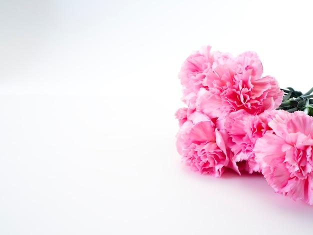 Oeillets roses fleurissent pour la fête des mères